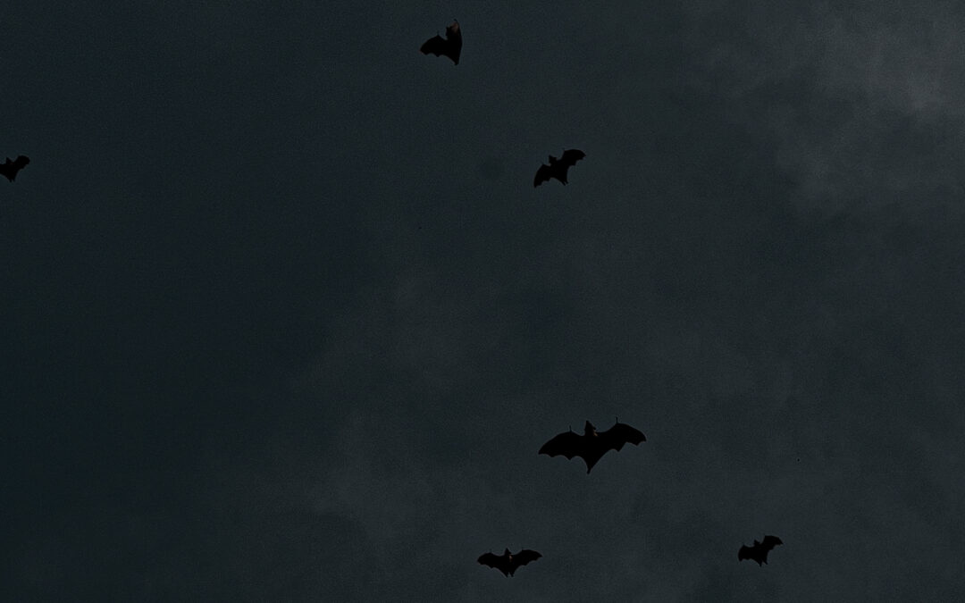 When Should I Start Thinking About Bat Removal?
